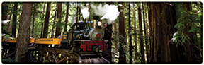 Image of train in forest